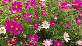 Summer flowers swaying in the wind stock video footage