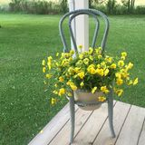 Summer Flowers. Trailing pansies in a rustic blue chair on a weathered porch Stock Images