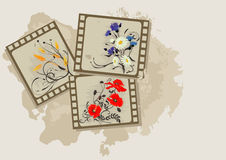 Summer flowers vintage photos. Summer background with flowers photos vintage Royalty Free Stock Images