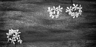 Summer flowers on vintage wooden background Stock Photography