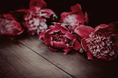 Summer flowers on vintage wooden background Stock Photos