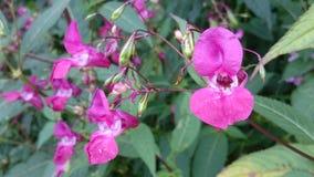 Summer flowers Stock Image