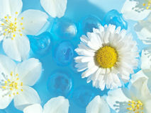 Summer Flowers on the Water. Beautiful jasmine and daisy flowers floating on blue water Stock Image