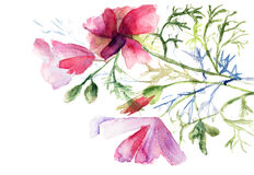 Summer flowers, watercolor illustration Royalty Free Stock Photos
