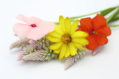 Summer flowers in a white background Royalty Free Stock Photo