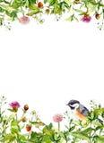 Summer flowers, wild grass, herbs, bird. Floral card, blank. Watercolor Stock Photo