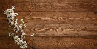 Summer Flowers on wood background with copyspace Royalty Free Stock Photo