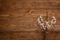 Summer Flowers on wood texture background Royalty Free Stock Photo