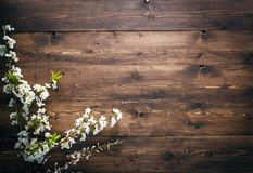 Summer Flowers on wood texture background with copyspace Stock Photos