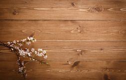 Summer Flowers on wood texture background with copyspace Stock Photography
