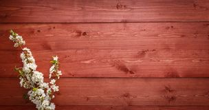 Summer Flowers on wood texture background Royalty Free Stock Photography