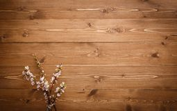 Summer Flowers on wood texture background Stock Images