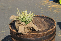 Summer flowers in a wooden barrel. Selective focus, shallow DoF Royalty Free Stock Image