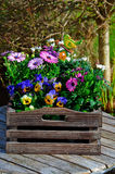 Summer flowers in a wooden box Stock Photo