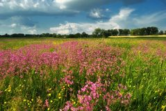 Summer meadow with flowers Stock Images