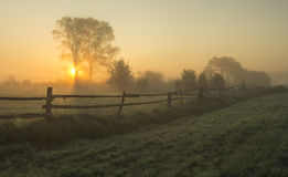 Summer, foggy, sunny morning. Summer, hazy meadow in the moonlight,near lake Dabie,Poland Royalty Free Stock Photos