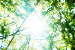 Summer foliage Royalty Free Stock Images