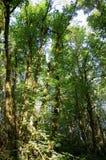 Summer Foliage , Eagle Creek, Columbia Gorge, Oregon Royalty Free Stock Photography