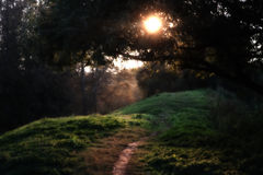 Summer footpath. The evening sun does deep shadows in foliage Stock Photo