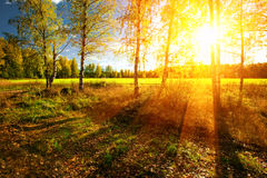 Summer forest. Beautiful landscape with summer forest and sunset Stock Photo