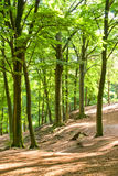 Summer forest. Summer fairytale forest with nice sunlight Stock Images