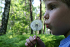Summer forest. Boy with dandelion Stock Photo