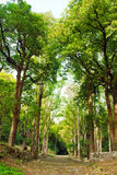 Summer Forest. Forest in a sunny day Royalty Free Stock Photos
