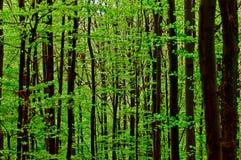 Summer forest. Wild summer forest Carpathian Mountains Ukraine Royalty Free Stock Photo
