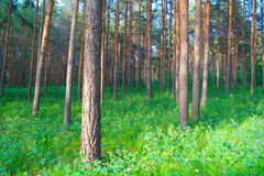 In summer forest Stock Photo