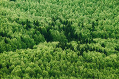 Summer forest Royalty Free Stock Photos