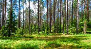 Summer forest. Sunny meadow at summer forest stock image