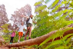 Summer forest activity kids walk over the log. Boy and two girl walk over the log in the forest balancing with hands as summer camp activity game royalty free stock image