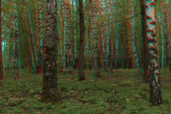 Summer forest anaglyph. Can be used in article about anaglyph, on thematic sites etc royalty free stock photo
