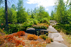 Summer forest nature Royalty Free Stock Photos