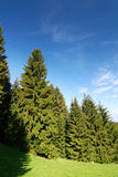 Summer forest and blue sky Royalty Free Stock Photography