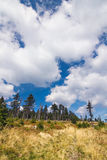 Summer forest and blue sky with clouds Stock Photos