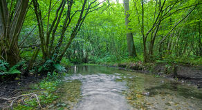 Summer forest with creek. Vivid green summer forest with a running creek Stock Image