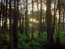 Summer forest. Summer day in forest Stock Image
