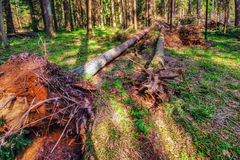 Summer forest Stock Photography
