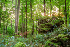 Summer Forest Evening. Picture of a Forest in  Bavaria. Shot was taken on a warm High Summer August day in a rocky forest area in Upper Franconia Stock Photo