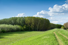 Summer forest and ground road Royalty Free Stock Image