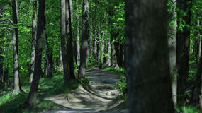 In summer the forest during the heat royalty free stock photography