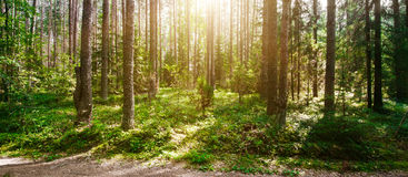 Summer forest jungle stock image