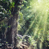 Summer forest jungle Stock Photography