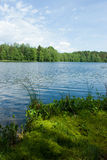 Summer at the forest lake stock photos