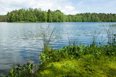 Summer at the forest lake Stock Image