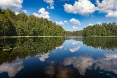 Summer forest lake. Summer day at a forest lake Royalty Free Stock Image
