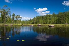 Summer forest lake reflections Royalty Free Stock Photography