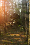 Summer forest landscape - ancient stone boulder in the forest at the sunrise Royalty Free Stock Image