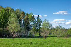 Summer forest landscape royalty free stock photo